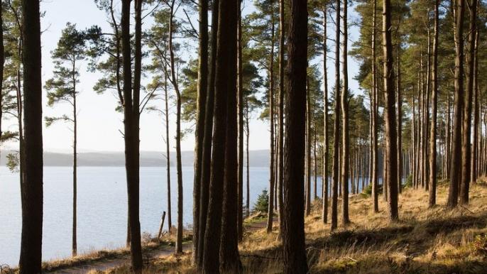 MTB TRIP Kielder Forest for 2RIDE.nl
