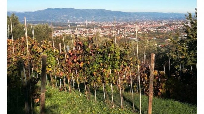 The Forgotten Hills for Amazing Lucca