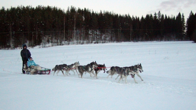 Husky Sledge ride for Varjola Resort & Activities