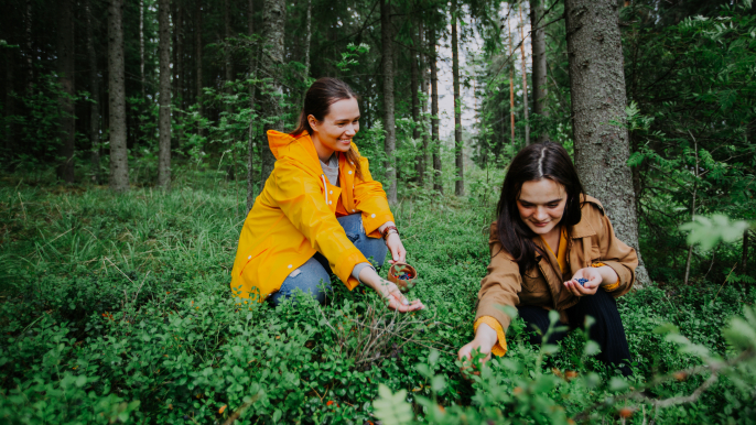 Berry and mushroom picking in Nuuksio National park for Hotelli Nuuksio