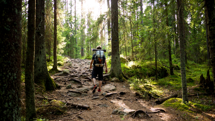 Nordic Forest Walk and Picnic for Hotelli Nuuksio