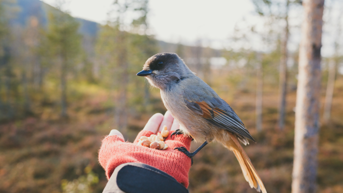 Forest experience trail and lunch or dinner for Hotelli Nuuksio