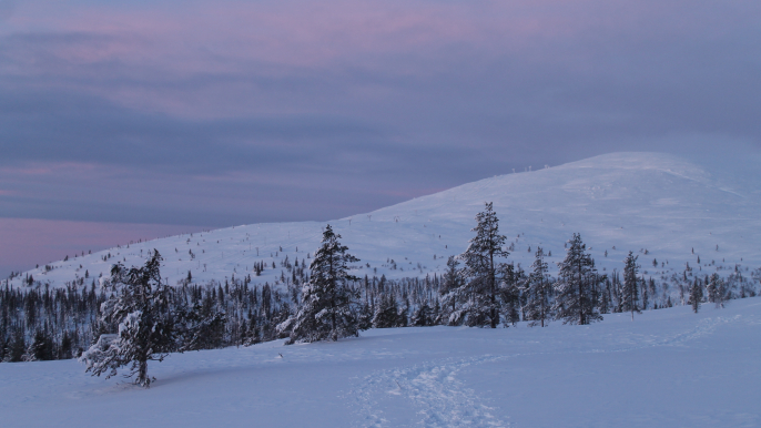 Snowshoeing at Pallas fells in the national park for Juki Tours