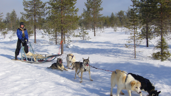 Visit a Husky Farm and 2 Hour Husky Safari for Lapland Welcome Ltd