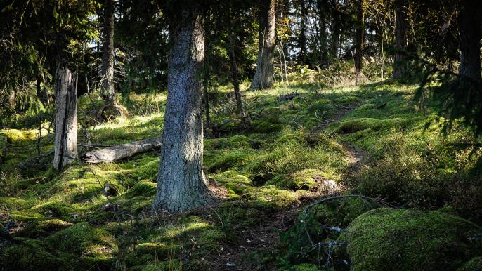 Redrib Nature Reserve Experience for REDRIB Experience
